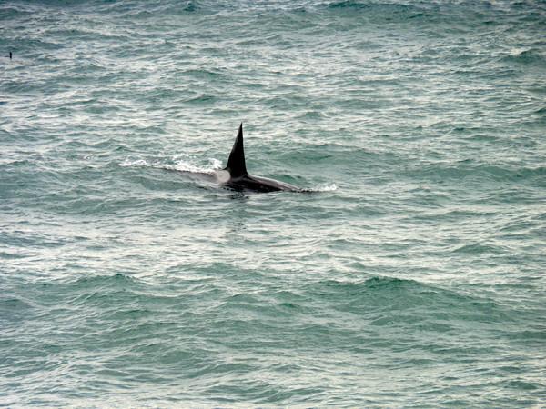 orca P1000700