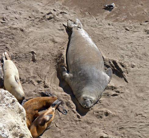 elefante on beach P1000613