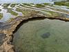 PV circular formations P1000863