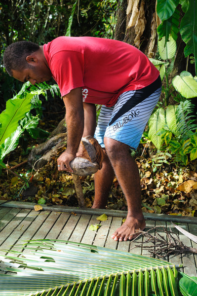 Removing the husk to get the coconut