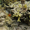 A clownfish keeping his eye on me