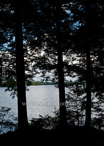 View of Ellis Pond through the trees.