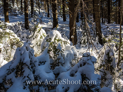 Little tiny snow covered trees.