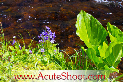 Violets by the river.
