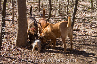 Arrow, Red, Eddie and Lucy. April 2013