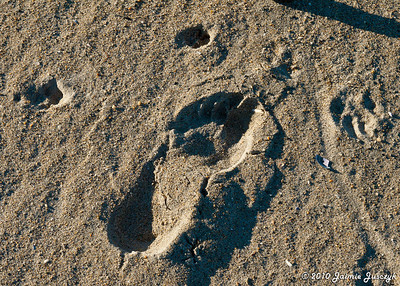 I should have placed a dollar bill next to Brian's foot print to show just how BIG it was!