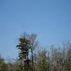 Honey Island Swamp Tour - 022