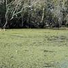 Honey Island Swamp Tour - 026