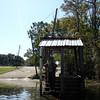 Honey Island Swamp Tour - 016