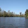 Honey Island Swamp Tour - 019