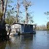 Honey Island Swamp Tour - 017