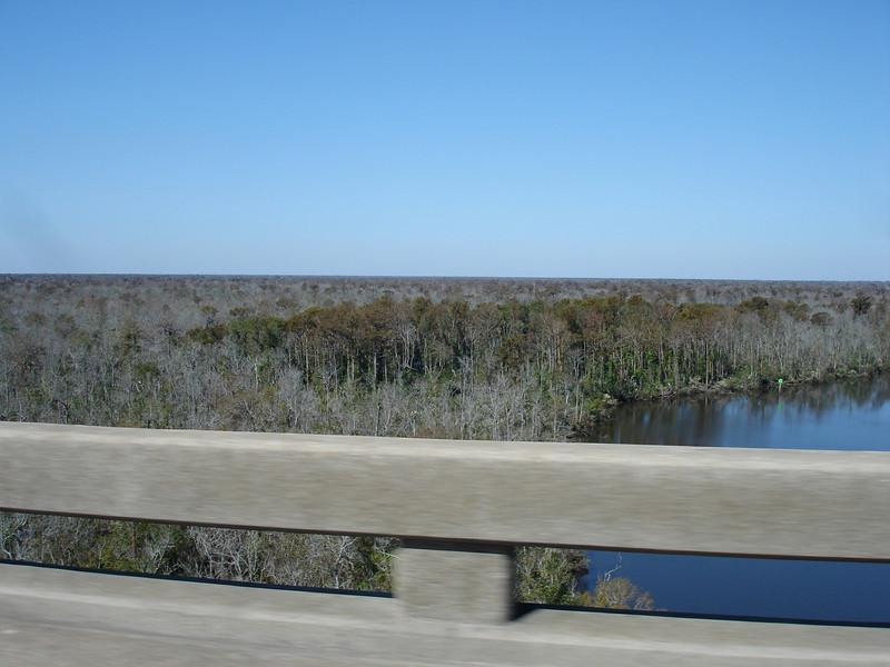Honey Island Swamp Tour - 003