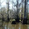 Honey Island Swamp Tour - 024