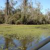 Honey Island Swamp Tour - 025