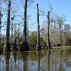 Honey Island Swamp Tour - 023