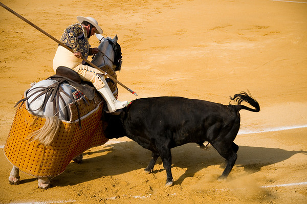 Next a picador enters the arena with a lance, to spear the bull in the neck to wear down the neck muscles.. if he's successful the bull will hold its head and horns lower during the latter stages of the fight