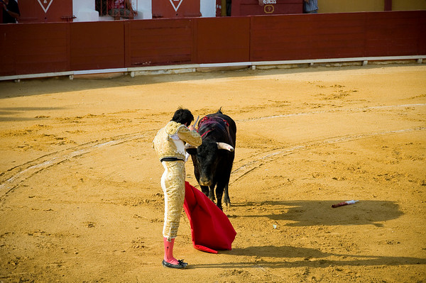 The last stage of the fight shows the matador maneuvering the bull into a position where he can stab it between the shoulder blades with the muleta, or short sword
