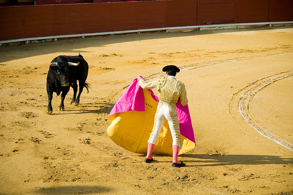 The bulls are tested by the banderillerros and the matadors during the beginning of the bullfight