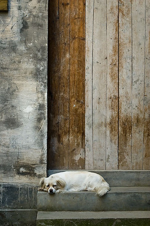 Dog sleep in front of a door, An Hui (China) 婺源 (安徽)
