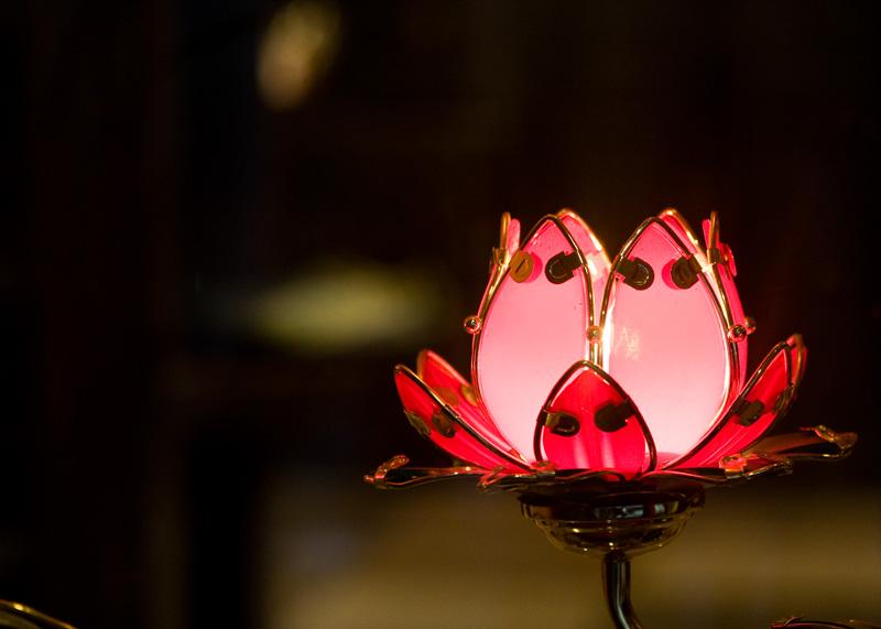 Lotus Light in a Shop Window in Shanghai