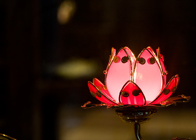 Lotus Light in a Shop Window in Shanghai