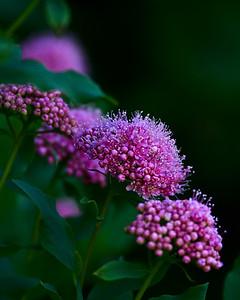 Highline Trail Blooms