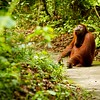 ...and she stopped, sat down and gazed peacefully at the beautiful nature she lives in with a content smile on her face... { the orangutan who loves the world} -Siswe Borneo, Indonesia
