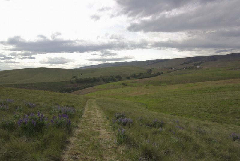 Dalles Mountain trail.