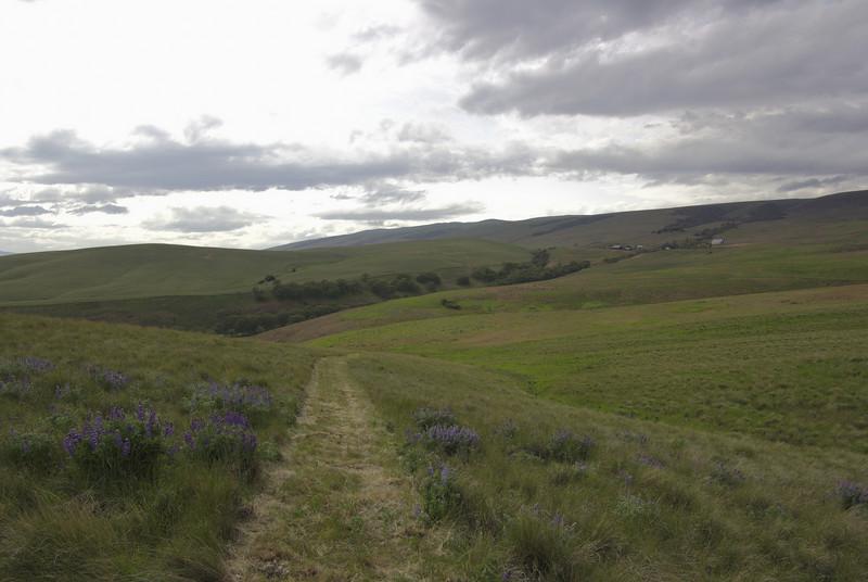 Dalles Mountain trail.