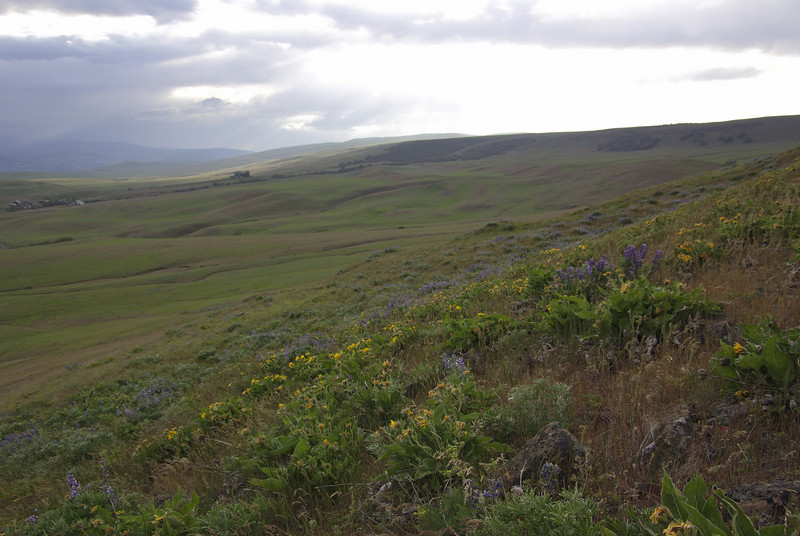 Dalles Mountain trail. flowers