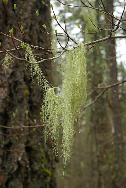 It was a very moist area and this lichen (or moss) was handing everywhere.