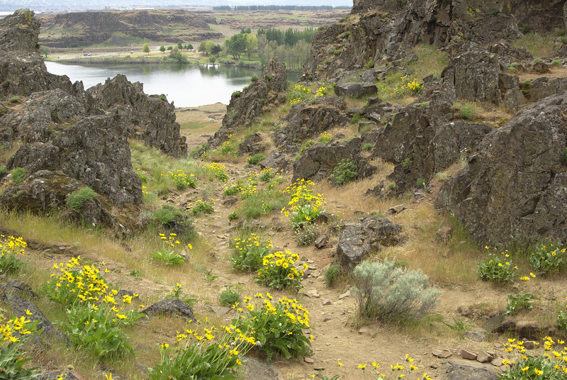 Horsethief Butte.  More flowers.  These yellow flowers were everywhere on the south side of the butte.
