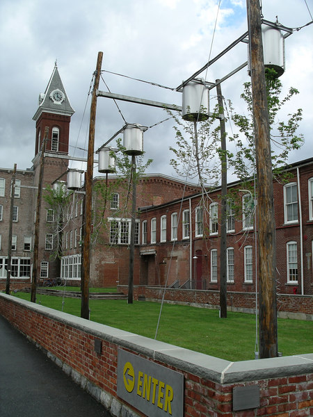 The upside-down trees at MassMoCA.  Excellent exampole of geotropism.