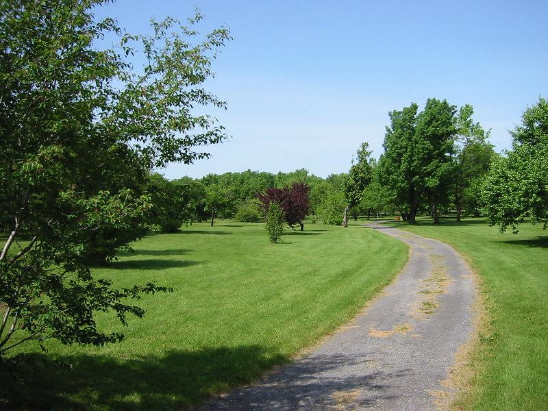 Arboredium