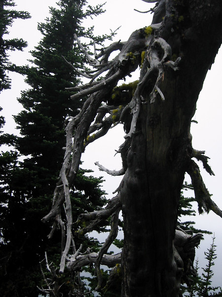 Just some gnarled tree that I liked