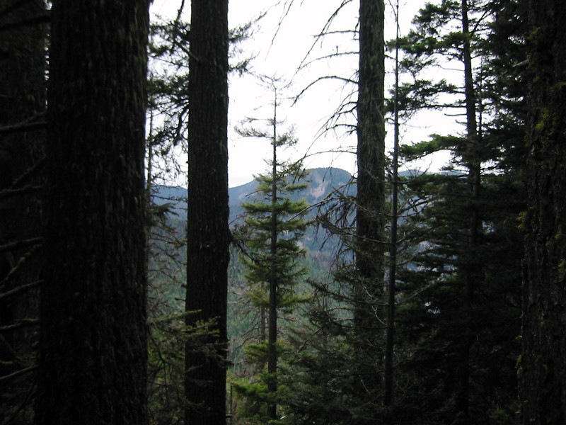 Dense forest on the way up