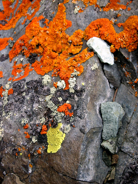 What can I say I'm a sucker for lichen