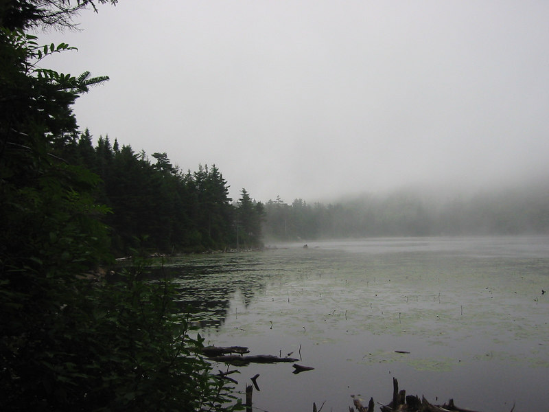 Foggy Lake Solitude