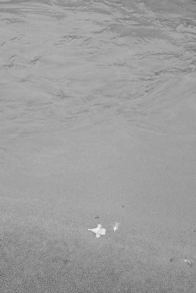 Hobbit Beach.  Spring draining into the ocean.