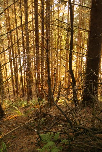 Samuel H. Boardman State Scenic Corridor. Sunset in the woods, last minute photo stop.