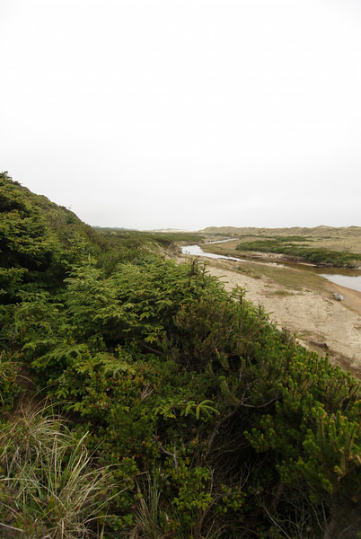 Sutton Dunes Trail, Oregon Dunes Nation Rec. Area.