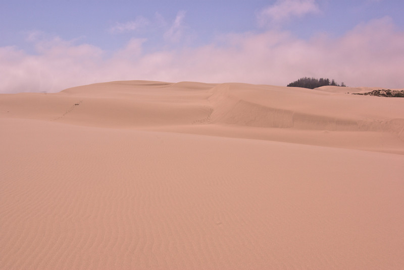 Oregon Dunes National Recreation Area on the John Dallenback Trail.