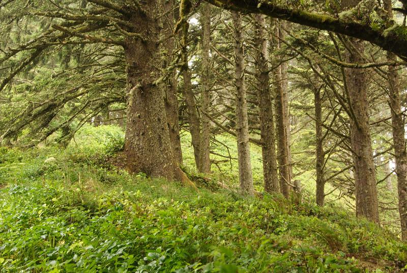 Heceta Light Trail.