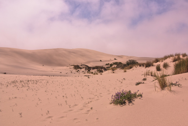 Oregon Dunes National Recreation Area on the John Dallenback Trail.