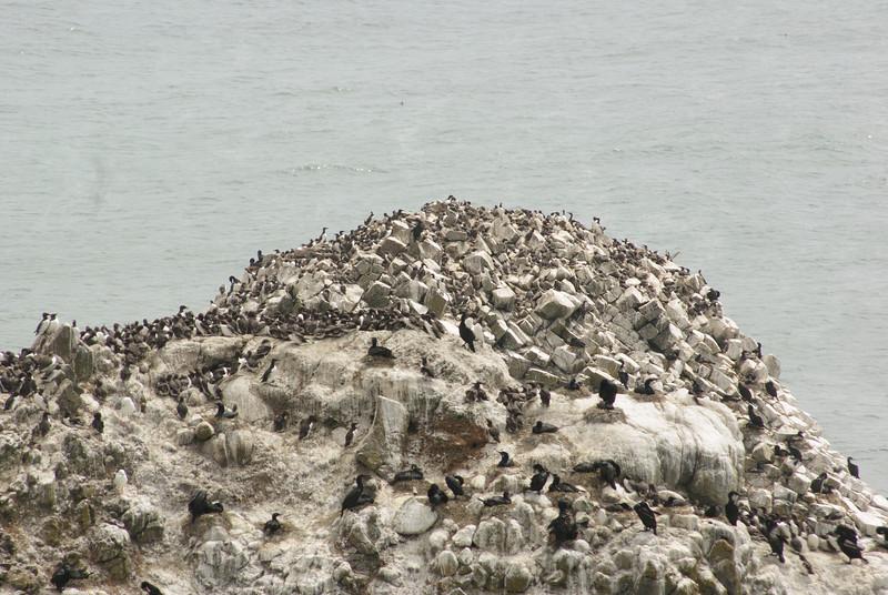 Heceta Head. Birds on the rock.