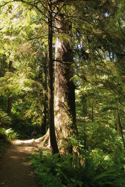 Cape Perpetua. Giant Spruce Trail.
