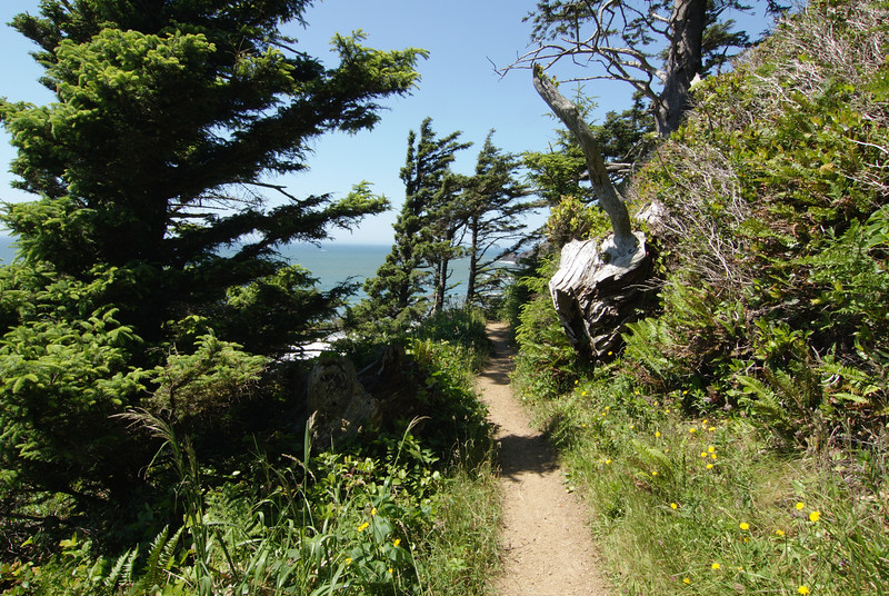 Ecola State Park.  trail to Indian Beach.