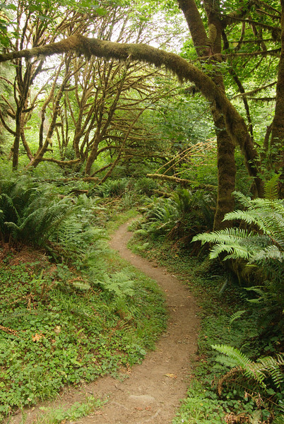 Prairie Creek Redwoods State Park. Rhododendron Trail.