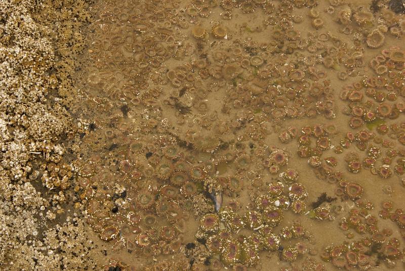 Yachats Trial 804.  Tidal pool.