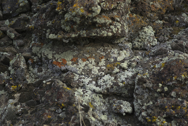 """Forgotten Trails"" hike in the Columbia Basin National Wildlife Refuge.   Some lichen on rocks.  2008"
